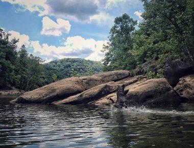 Geese fishing on Lake Cumberland